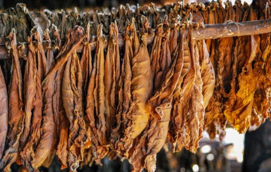 tabak fermentieren