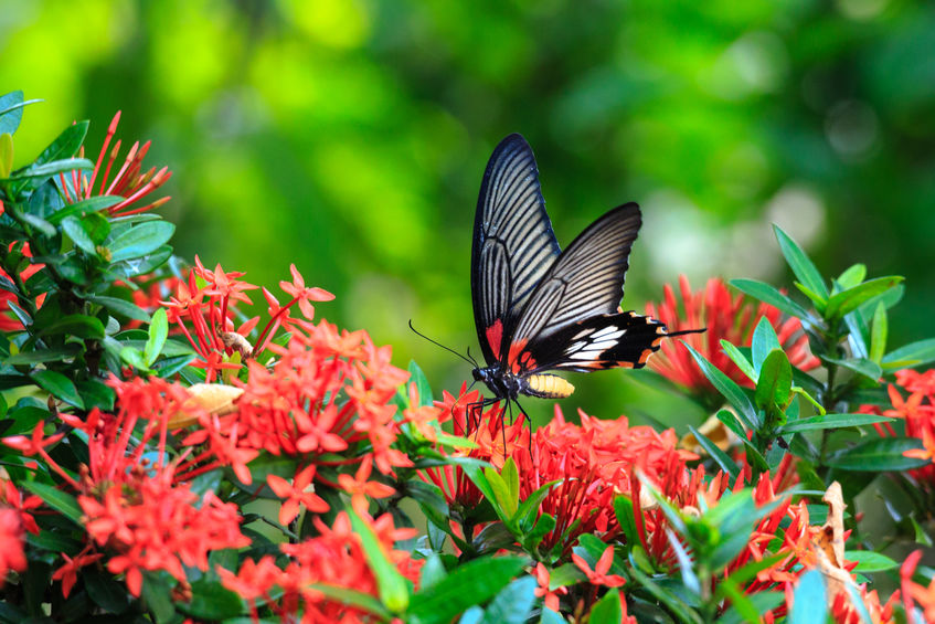 Schmetterlinge Anlocken