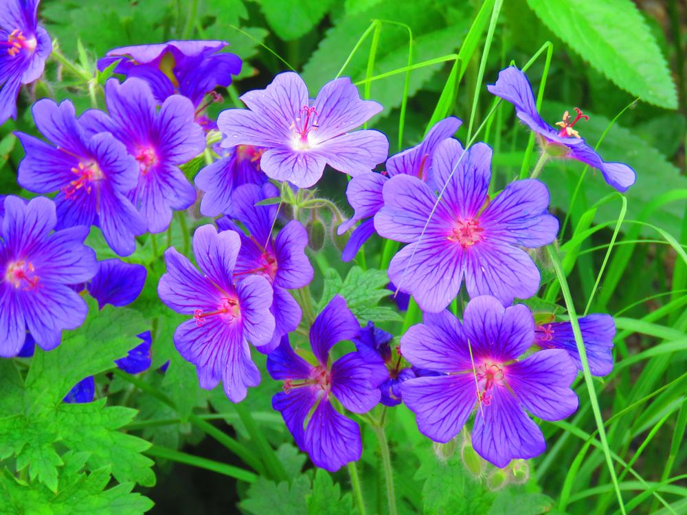 vermehrung und pflanzen