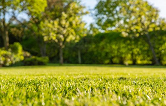 wie wird gelber rasen wieder grün
