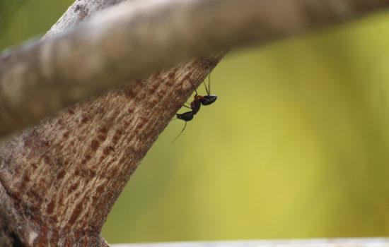 Ameisen am Baum